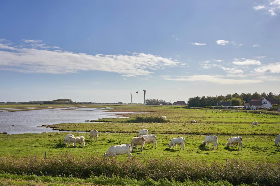 de Oude Dee - Weide met schapen
